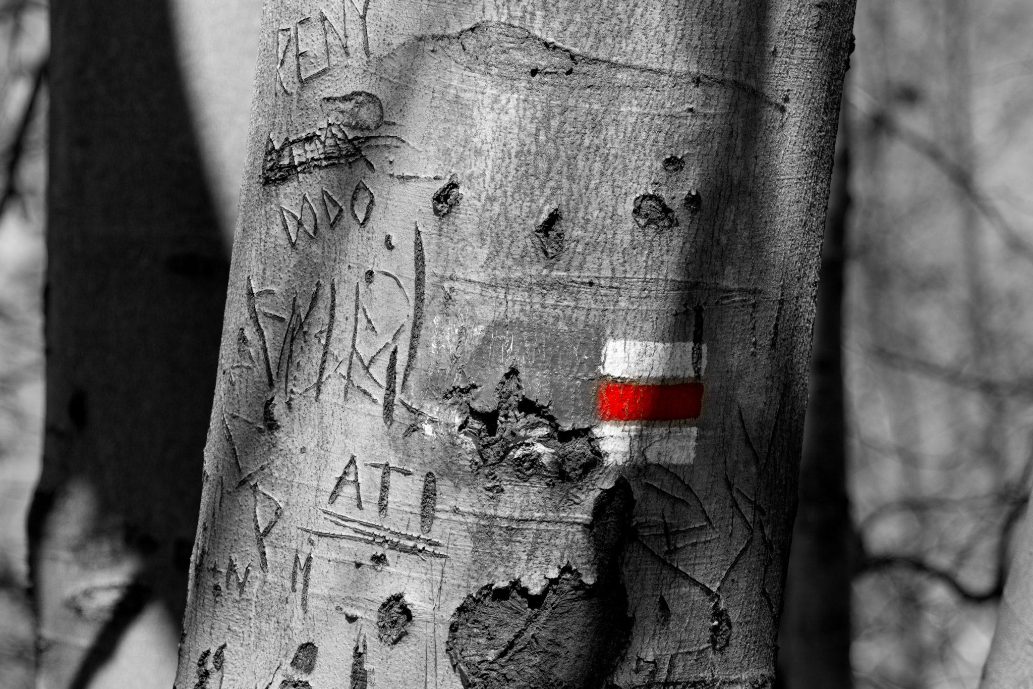 strom SK
